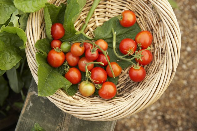 Basket of tomatoes, directly above