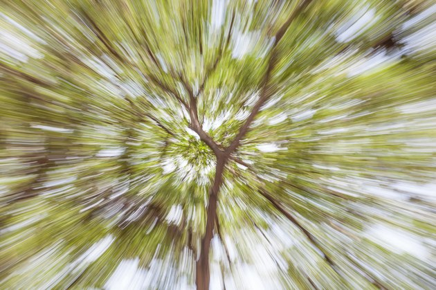 Blurred bokeh of green tree in forest background.