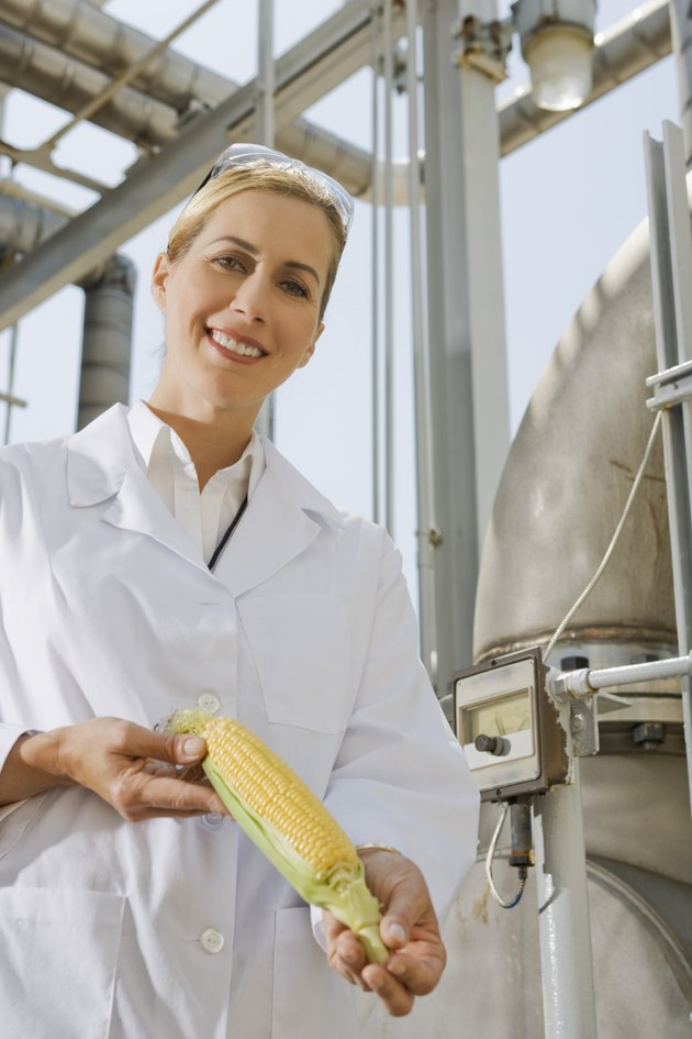 Scientist holding corn