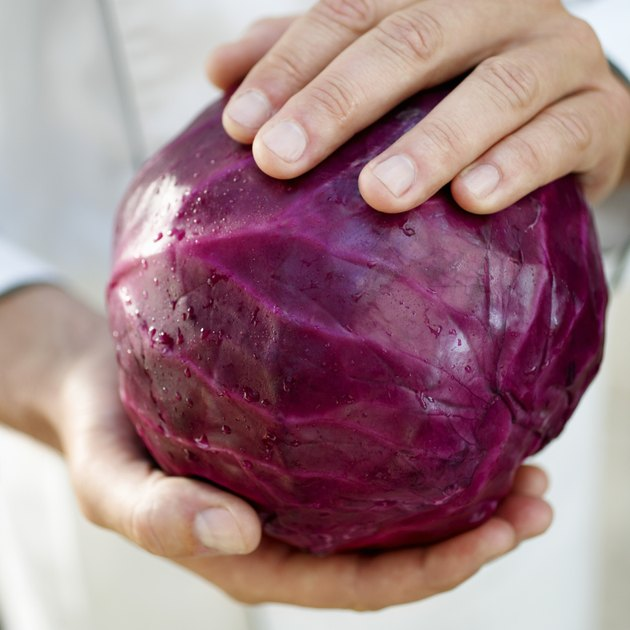 Man Holding Red Cabbage