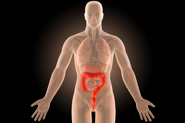 3d illustration human body crohn's colon infection with clipping path.