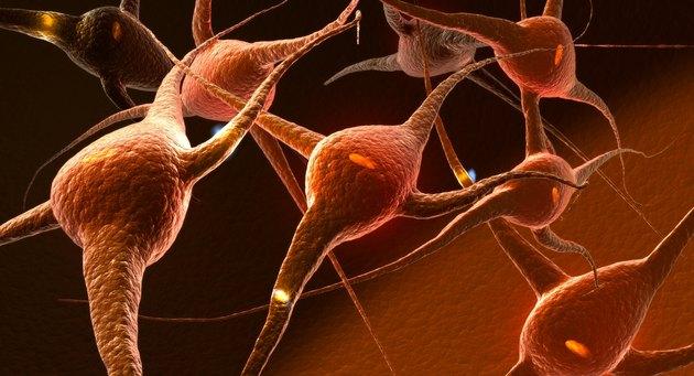 Neuron Impulses