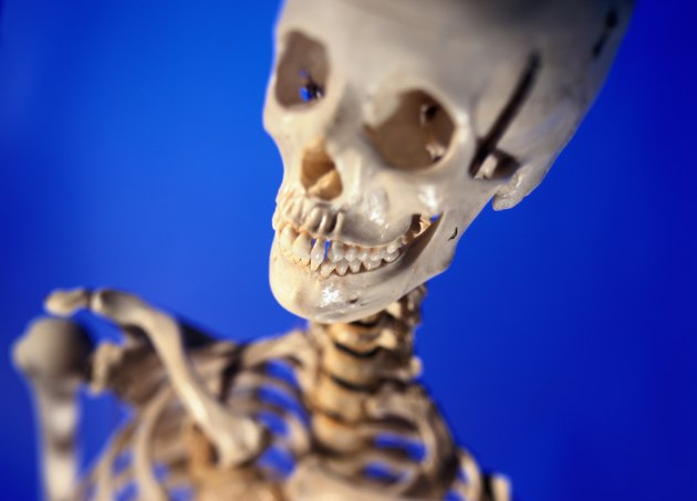 The human skeleton in a laboratory
