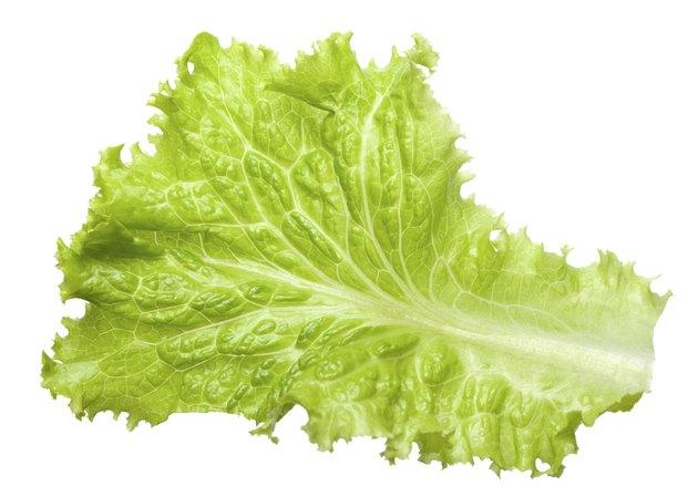 Macro of lettuce leaf