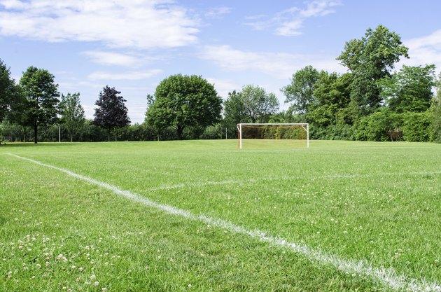 Sunny Soccer Field