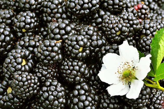 Blackberries background.