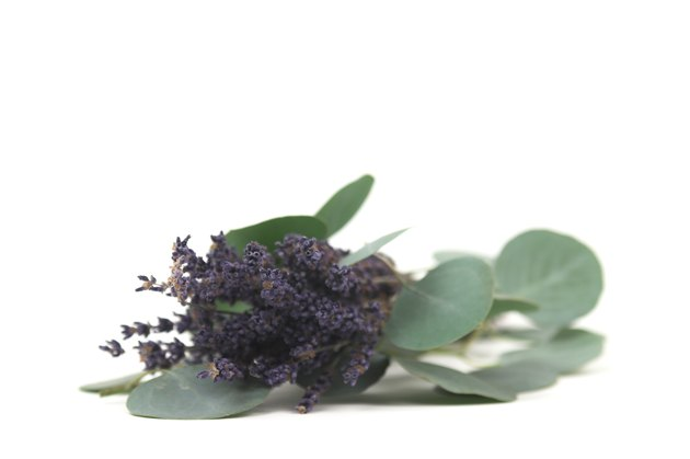 lavender and eucalyptus isolated