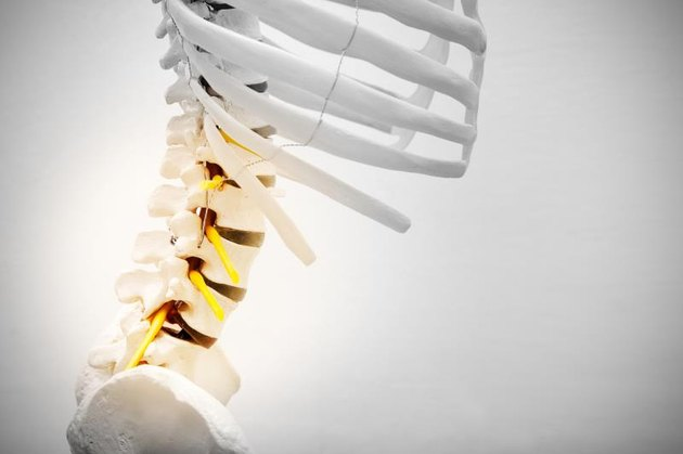 Model with lumbar bone