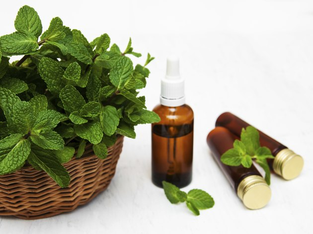 Bottles of mint oil and fresh mint