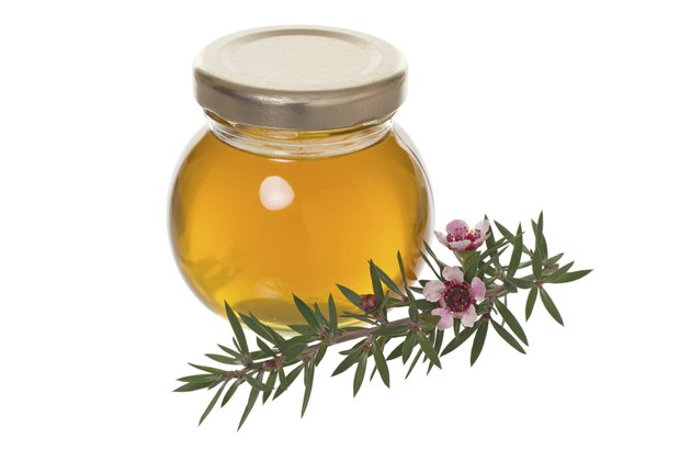 Jar of honey with manuka (tea tree or Leptospermum) flower