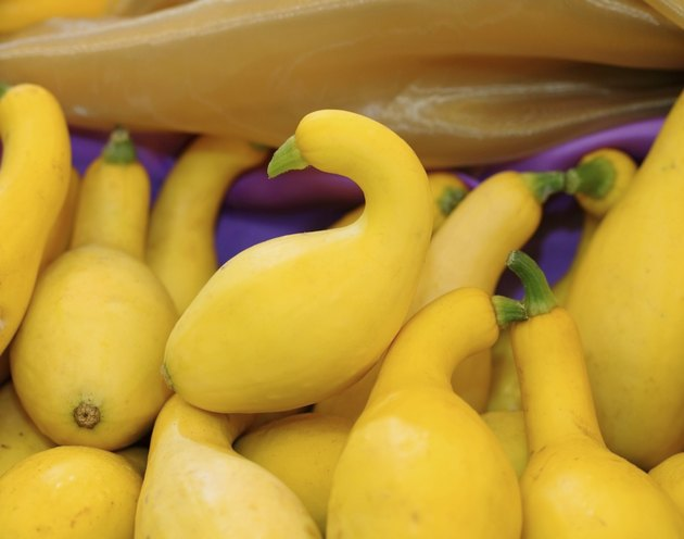 Crookneck squash (botanical name: Cucurbita pepo; species: Yello