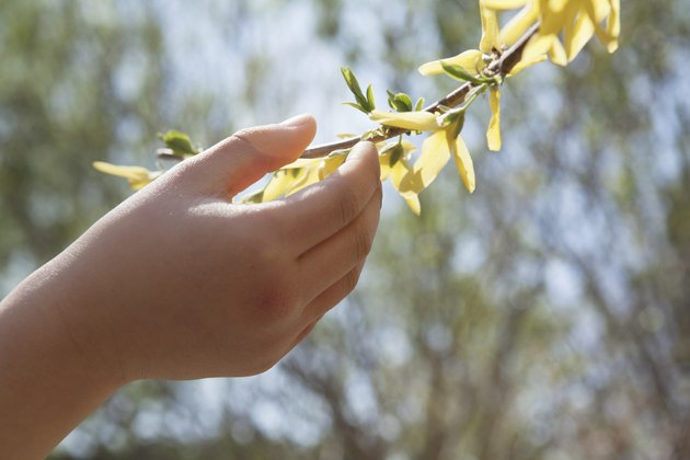 Close up of little girls hand touching a yellow blossom on a tree, outdoors in the park in springtime