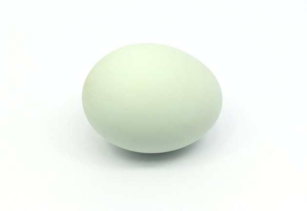 Duck egg isolated on white
