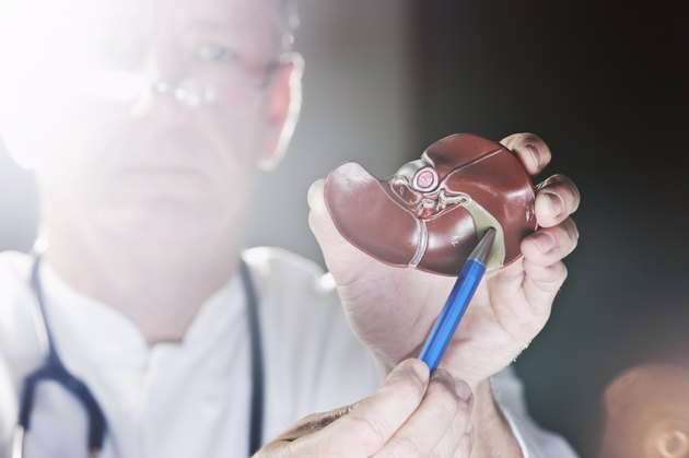 Doctor pointing at gall bladder