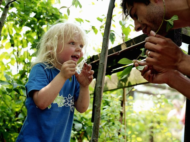 Father showing boy (2-5) plant in garden