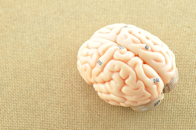 human brain on wooden background