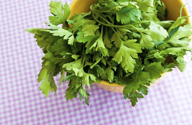 Fresh Herbs: Cilantro