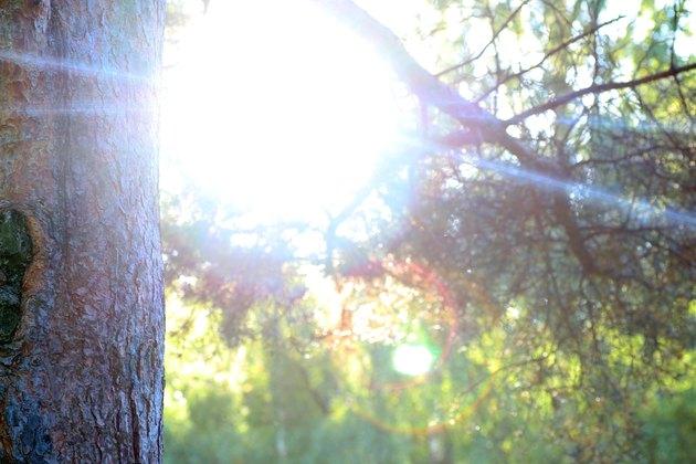 macro pine trunk sun