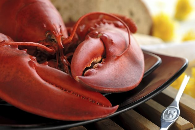 Boiled Atlantic Lobster