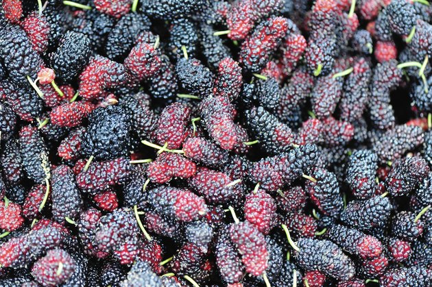 fresh mulberry