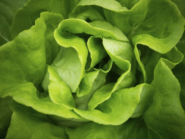 Lettuce background