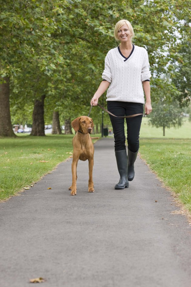Woman walking with Hungarian Vizsla dog
