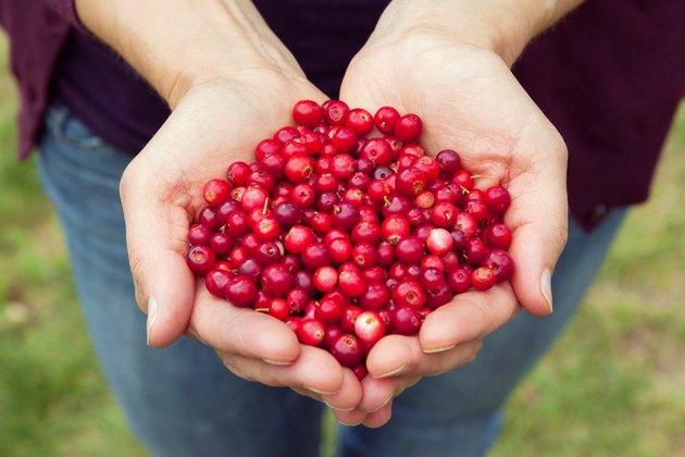 Woman hands full of berries