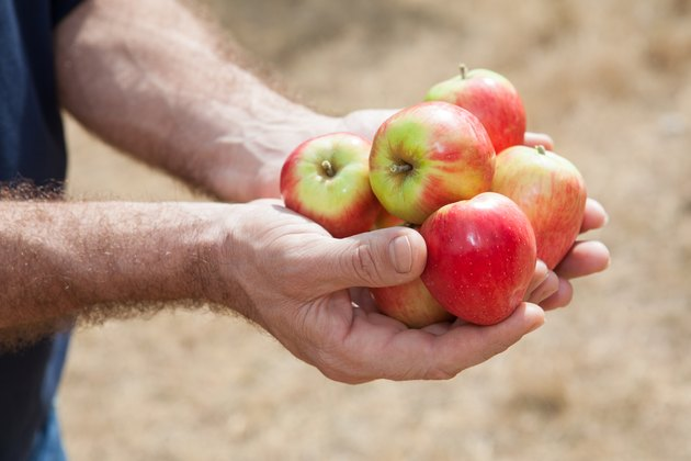 red fresh apples in human hands