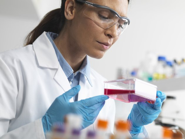 Cell biologist holding a flask containing stem cells, cultivated in red growth medium, to investigate diseases