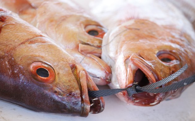 Red Snappers on a fish market in Kalk Bay