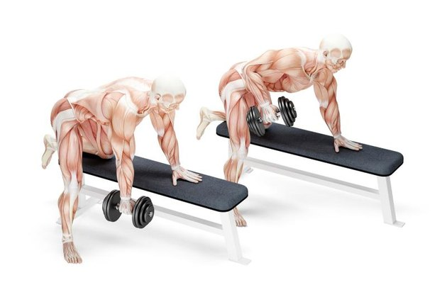 Dumbbell Rows exercise. Anatomical 3D illustration. Isolated with clipping path.