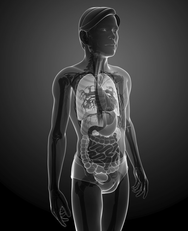 X-ray digestive system of male body artwork