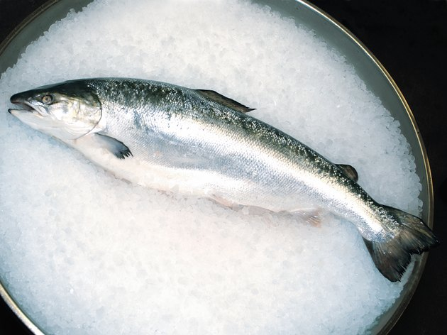 Photo, fresh salmon lying on a tub of ice, Color