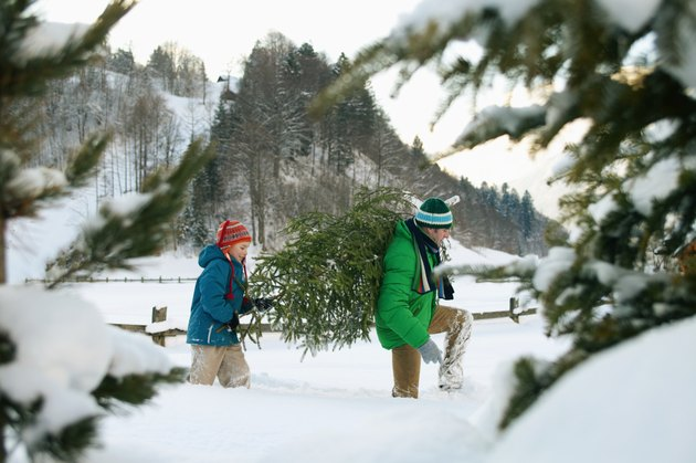 Father and son (8-10) carrying Christmas tree, view through trees
