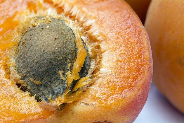 half apricot with stone, macro shot
