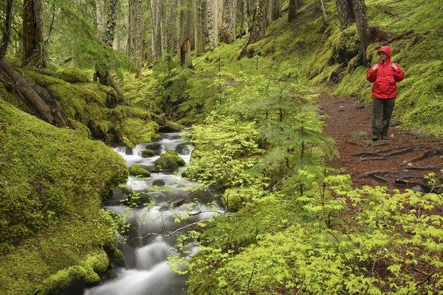 Ramona Creek Mount Hood Wilderness Oregon USA