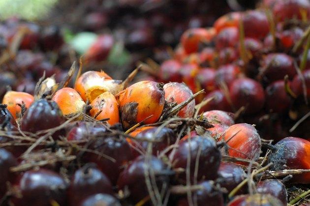 Fresh Palm Oil Fruit