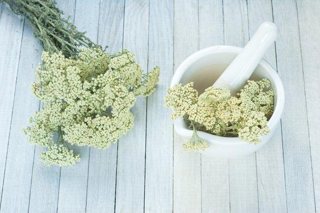 Milfoil herbal flowers