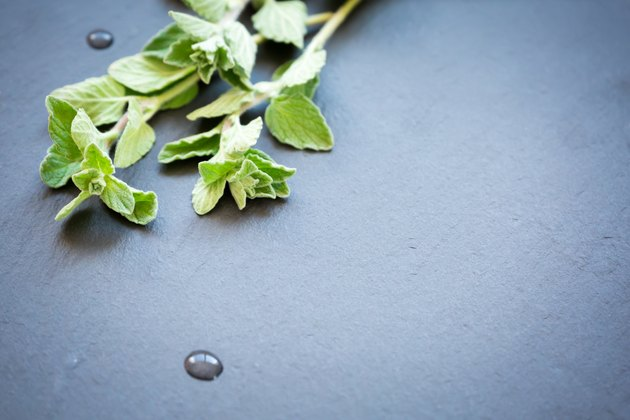 Fresh oregano on a dark stone background