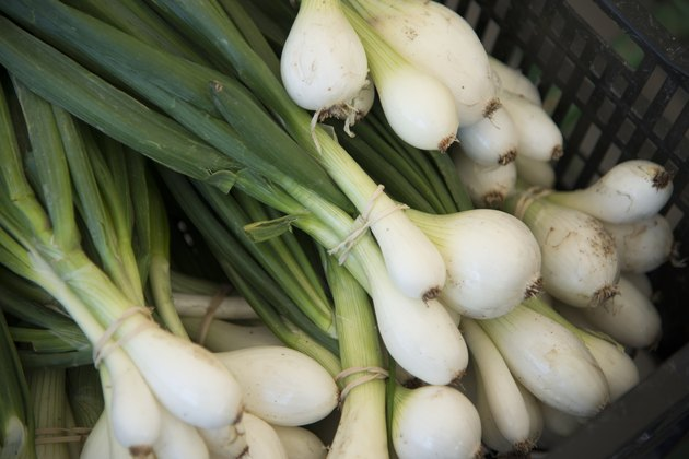 Close-up of spring onions, Kenora, Ontario, Canada