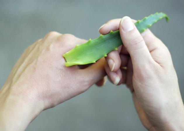 Aloe Vera in Hand