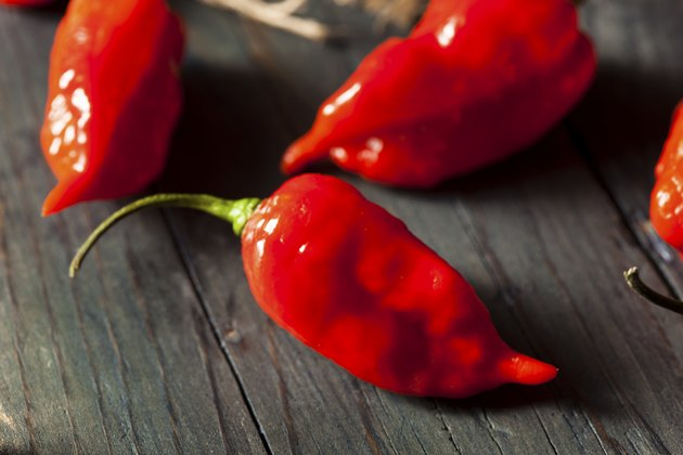 Spicy Hot Bhut Jolokia Ghost Peppers