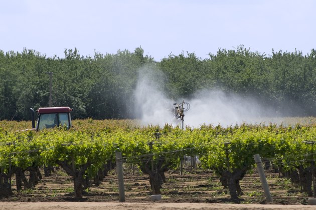 spraying vineyard