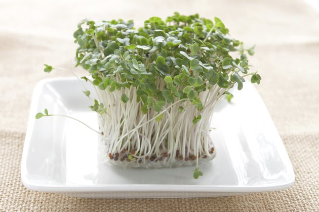 Broccoli sprouts on white plate