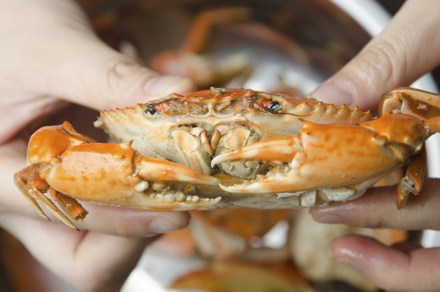 eatting seafood red crab