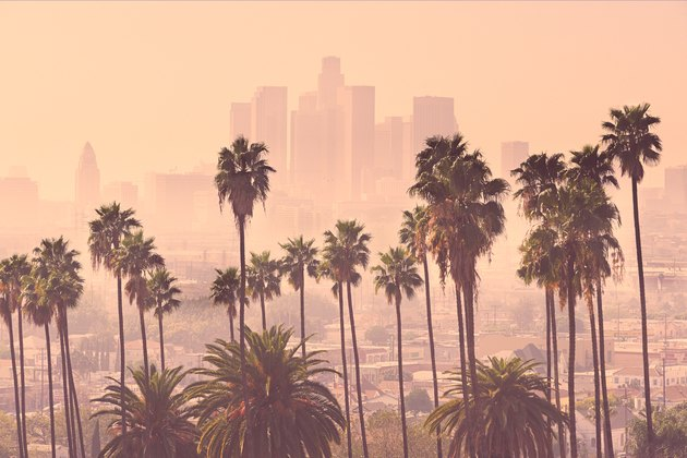 Smoggy Los Angeles downtown seen through palm trees
