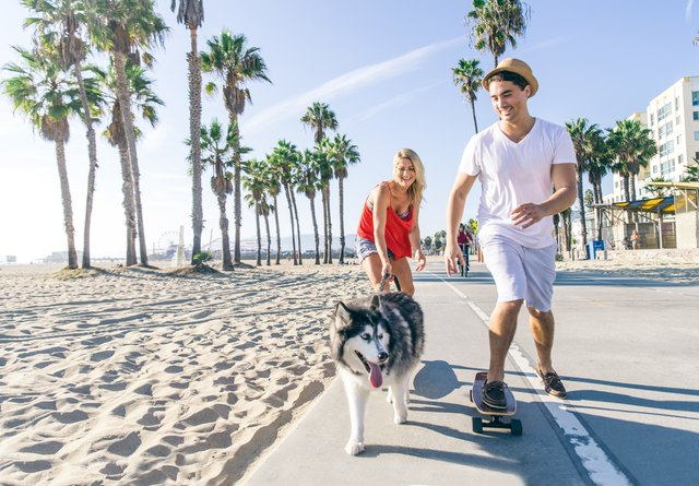 Couple with dog skating outdoors