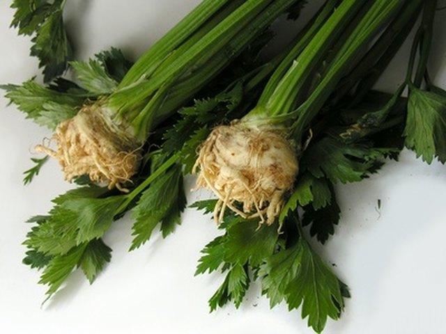 maca root benefits livestrong plant vegetable diente leon fotolia heart woman del