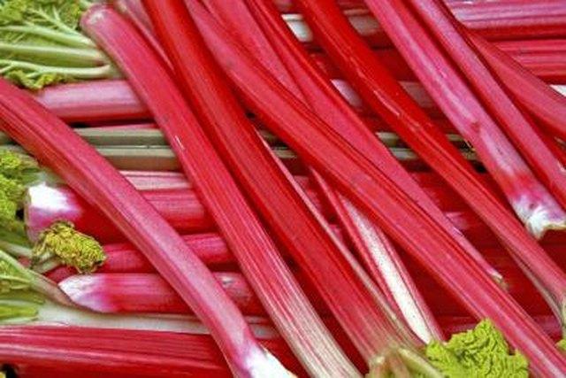 Difference Between Burdock & Rhubarb
