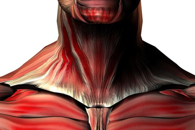 What Are Normal TSH (Thyroid) Levels?